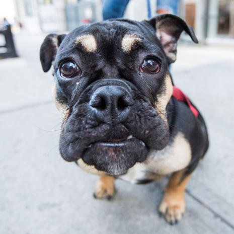 Pet portraits by The Dogist