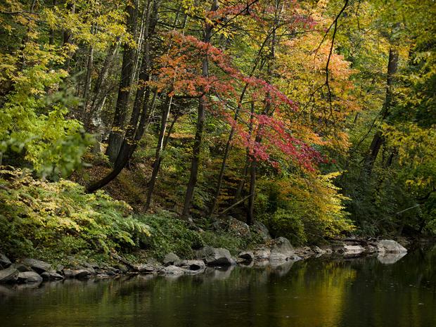 Fall foliage 2015