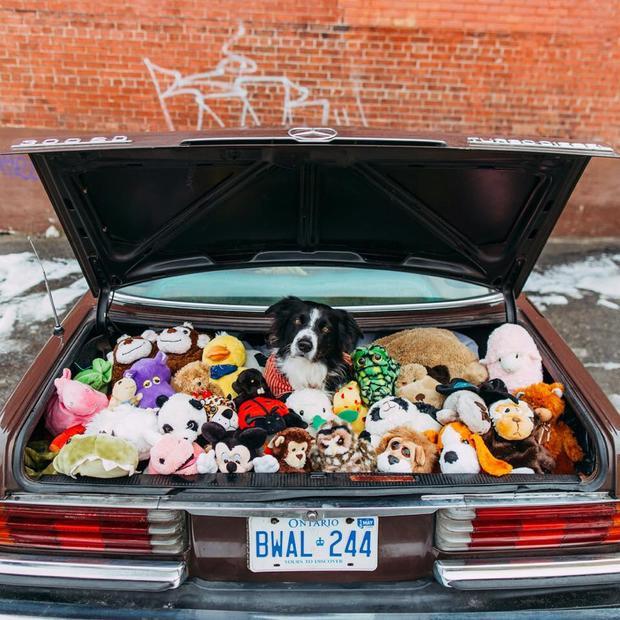 findmomo-trunk.jpg