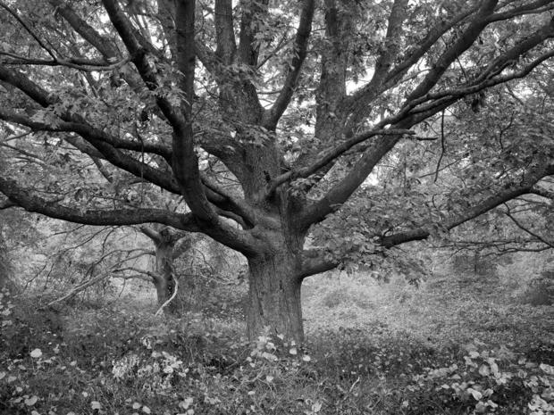 daniel-jones-family-tree-1992.jpg