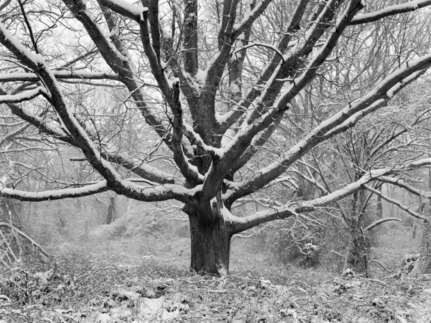 daniel-jones-family-tree-in-winter-1996.jpg