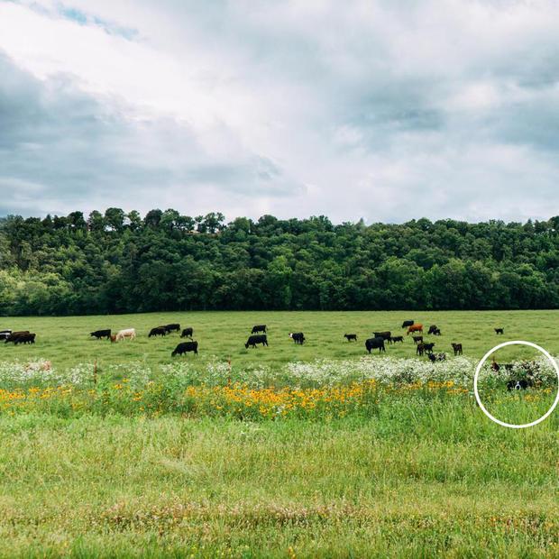 findmomocows-circle.jpg