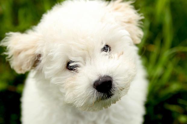 beast-puppy.jpg