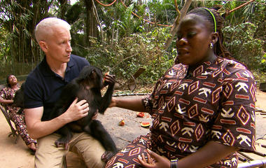 Nursing baby bonobos back to health