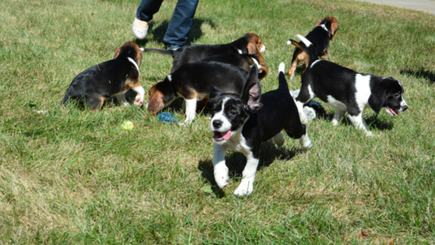 A rambunctious photo session with the first IVF puppies