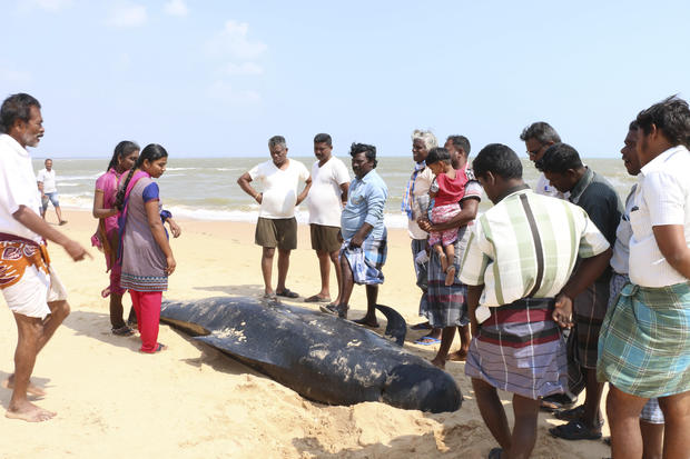 People look at one among the dozens of whales that have washed ashore on the Bay of Bengal coast's Manapad beach in Tuticorin district, Tamil Nadu state, India