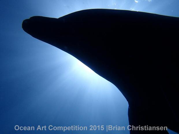 1st-cwa-ocean-art-2015-brian-christiansen.jpg