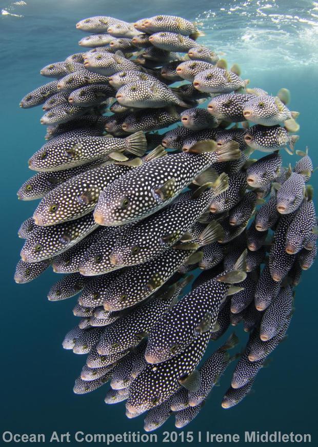 1st-ndslr-ocean-art-2015-irene-middleton.jpg