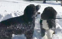 Bo and Sunny Obama enjoy a snow day