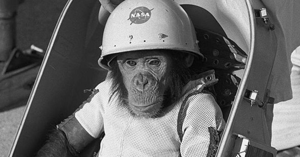 Almanac A Chimpanzee In Space Cbs News