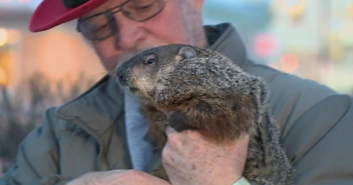 Runaway groundhog leaves Wis  town looking for replacement