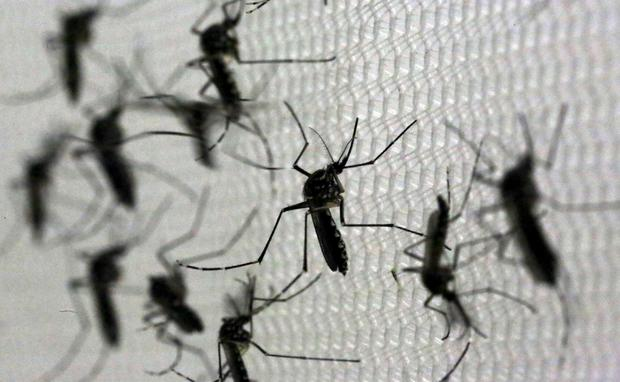 zika-mosquitoes.jpg