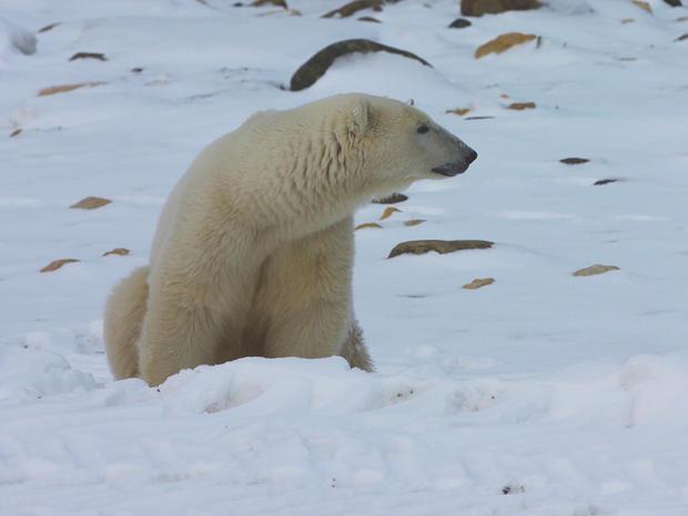 churchill-manitoba-polar-bear-capital-dustin-stephens-img1880.jpg