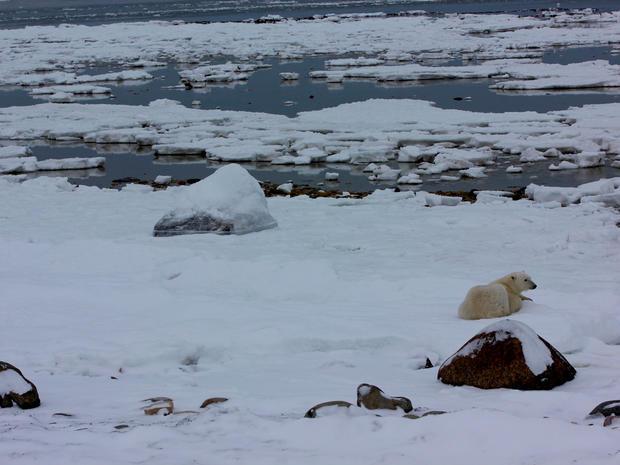 churchill-manitoba-polar-bear-capital-dustin-stephens-img1680.jpg