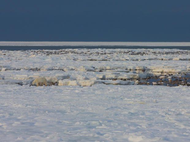 churchill-manitoba-polar-bear-capital-dustin-stephens-img1977.jpg