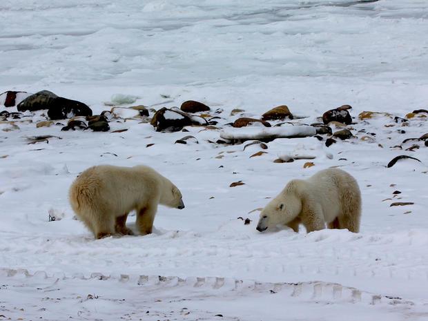 churchill-manitoba-polar-bear-capital-dustin-stephens-img1842.jpg