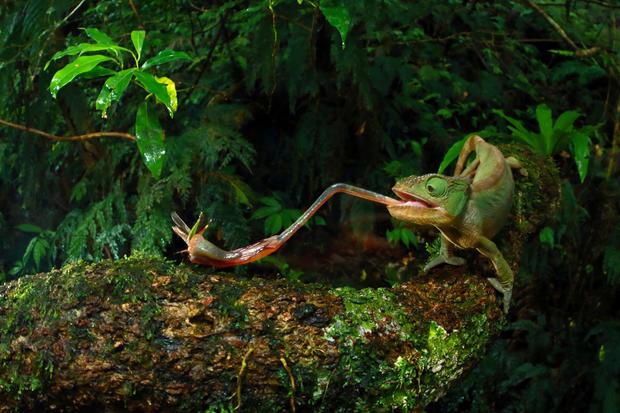 c-christian-ziegler-chameleon-under-pressure-02.jpg