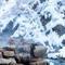 mark-hemmings-snow-monkeys-japan-dsf1963.jpg