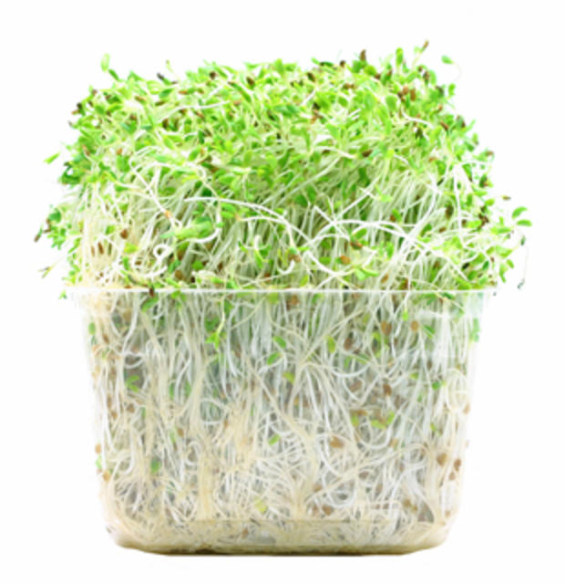 sprouts-photo.jpg