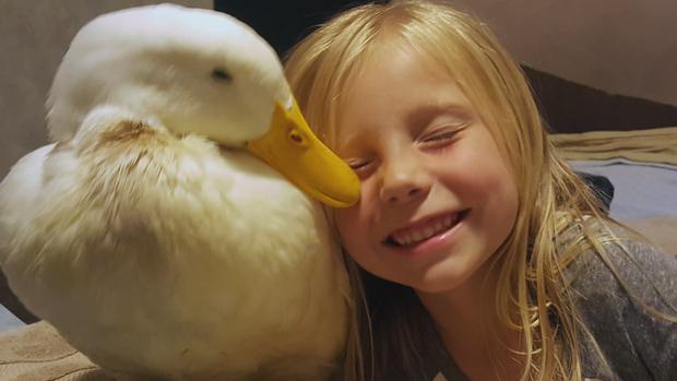 hartmanotrmama-duck.png