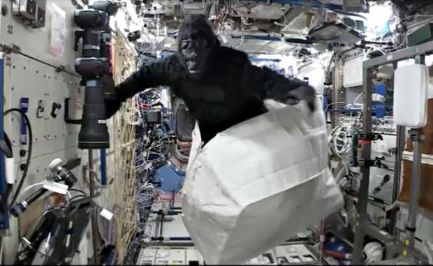 gorillainspace.jpg