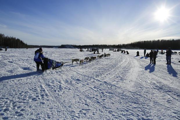 Iditarod dog-sled race-2016-03-07t080205z2014645366d1besrcjazaartrmadp3usa-iditarod.jpg