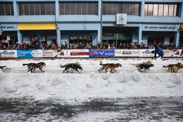Iditarod dog-sled race-2016-03-06t020156z1253319605gf10000335140rtrmadp3usa-iditarod.jpg