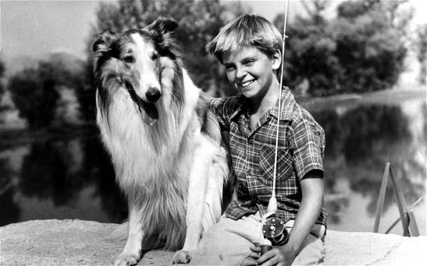 lassie2623786b.jpg