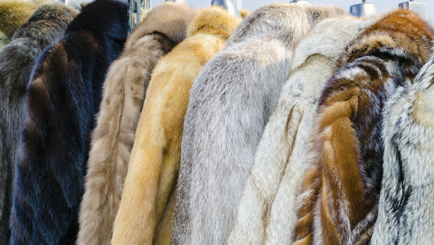 animals used for fur clothing 16 quotes have been tagged as fur: karl lagerfeld: 'in a meat-eating world, wearing leather for shoes and even clothes, the discussion of fur is childish.