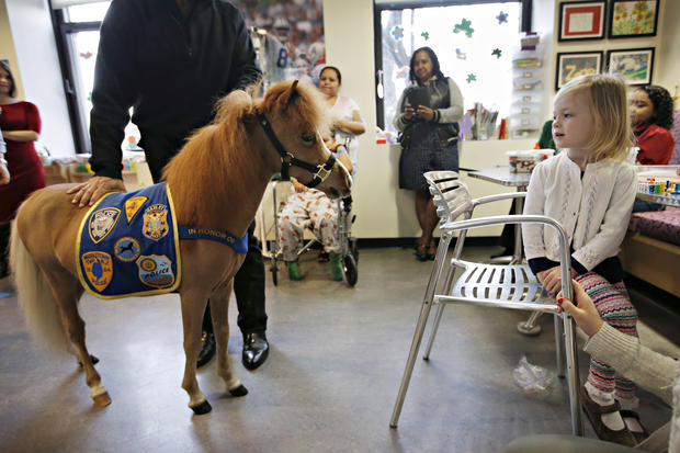 Therapy animals: Doggie docs, horse helpers, and more