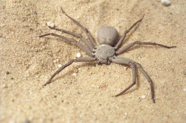 13  Spider in black - The world's most dangerous spiders (WARNING