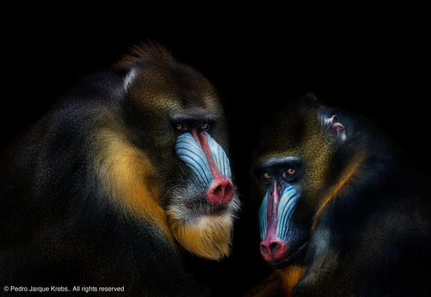 Smithsonian photo contest's best images