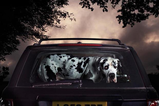 dogs-in-cars-alfie-by-martin-usborne.jpg