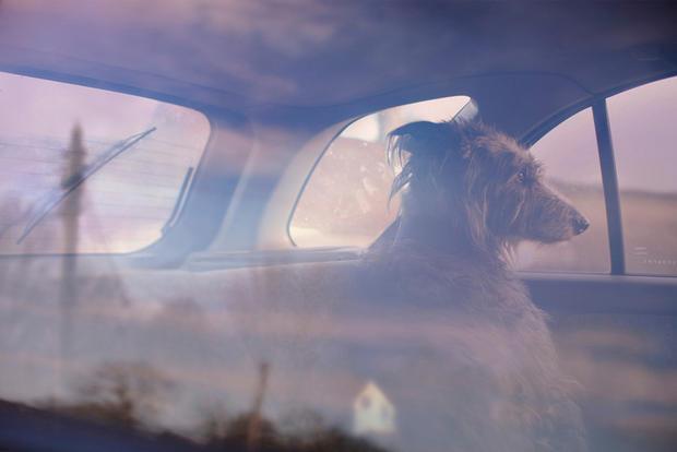 dogs-in-cars-winnie-by-martin-usborne.jpg