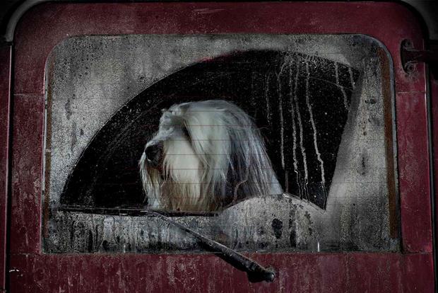 dogs-in-cars-burt-by-martin-usborne.jpg