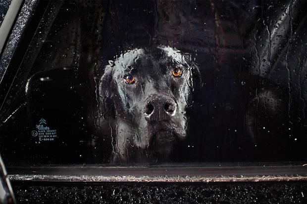 dogs-in-cars-prospero2-by-martin-usborne.jpg
