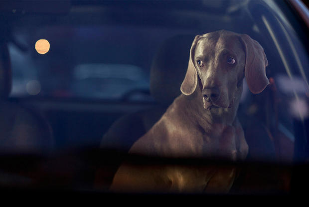 dogs-in-cars-hector-by-martin-usborne.jpg