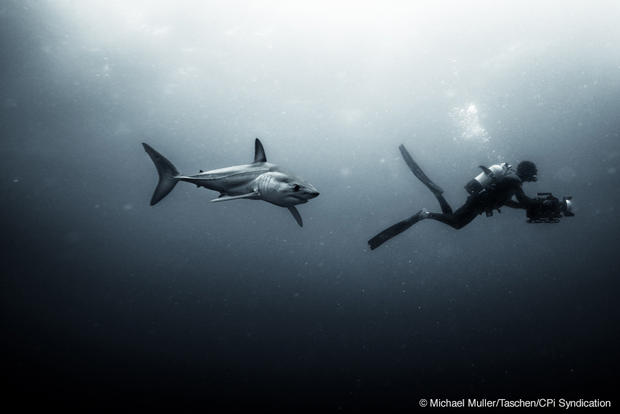 Face to face with sharks