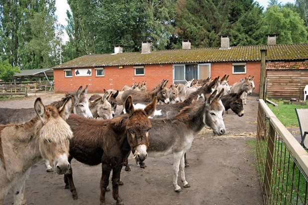donkey-farm.png