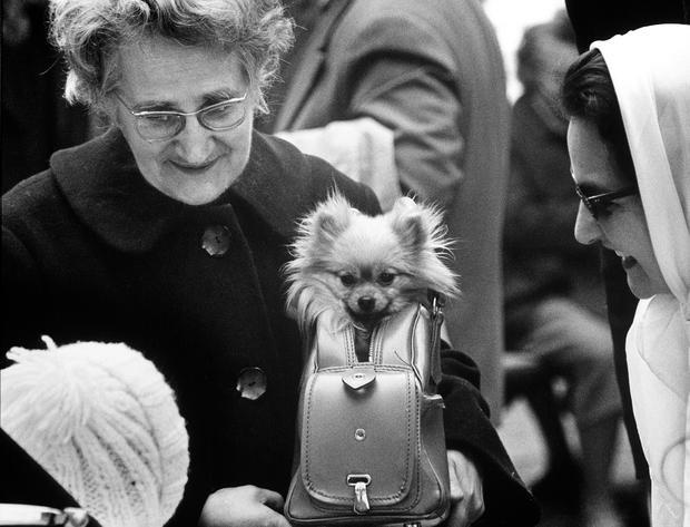 alfred-eisenstaedt-dog-in-purse.jpg