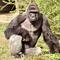 2016-05-30t071330z1019389258s1betgzcviaartrmadp3ohio-gorilla.jpg