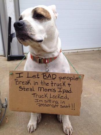 Hilarious dog shaming
