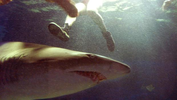 Shark attacks (WARNING: GRAPHIC IMAGES)