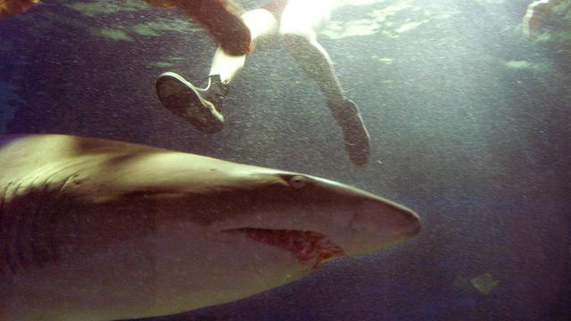 shark fight surfing Mick Fanning