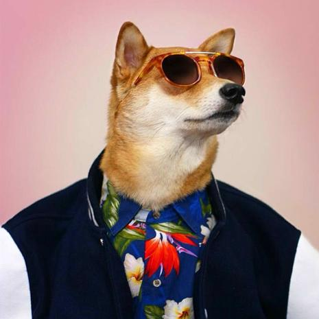 Instagram's most fashionable dog