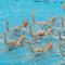 synchronizedswimming.jpg