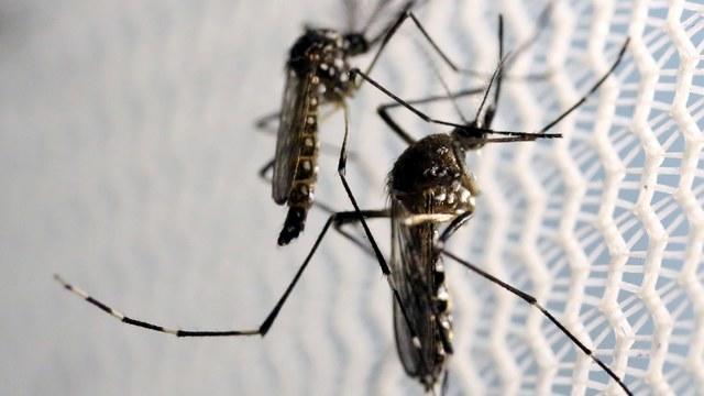 zika1102162640x360.jpg