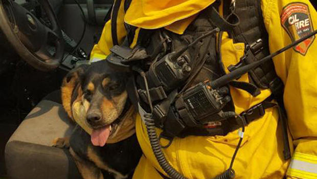Battalion Chief Mike Mohler with the California Department of Forestry and Fire Protection holds a dog that ran from a burning home near Phelan, California, Aug. 17, 2016.