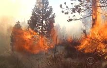 Researchers: Wildfires aren't being fought correctly