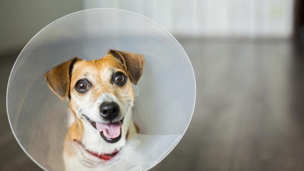 9 ways to get cheap or free vet care for your pet - CBS News